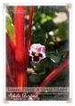 062214_GardenUpdate